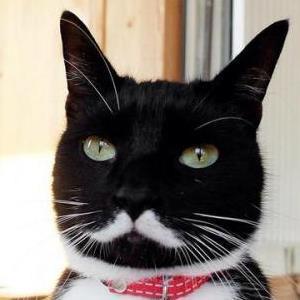 貴族っぽい猫 300x300.jpg